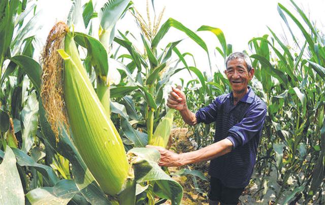 新都农业供给侧结构改革的一体两翼