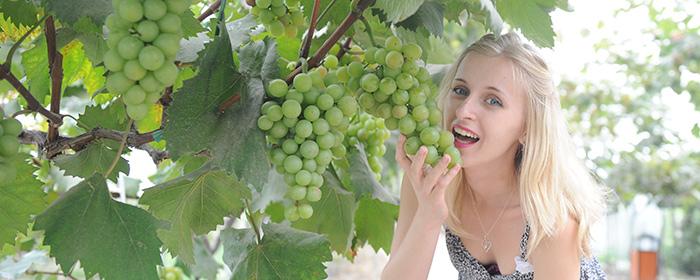 乌克兰美女:新民葡萄让我陶醉