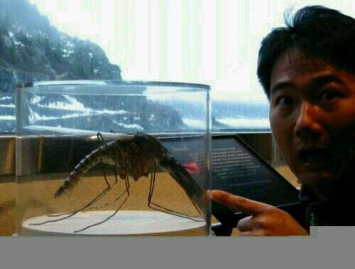 集中展示世界上最大的生物
